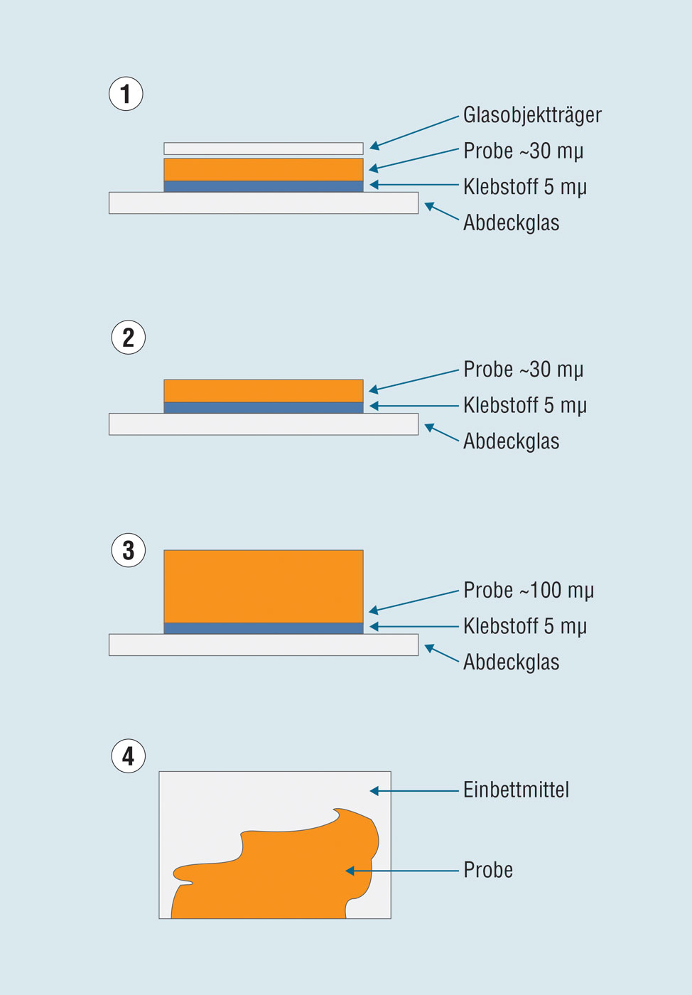 Specimen types in four groups